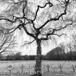 Marion Jebbink Fotografie Gemert - Militaire begraafplaats Ysselseijn